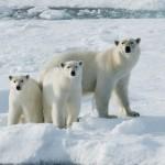 Ijsberen en Pinguins show foto 01