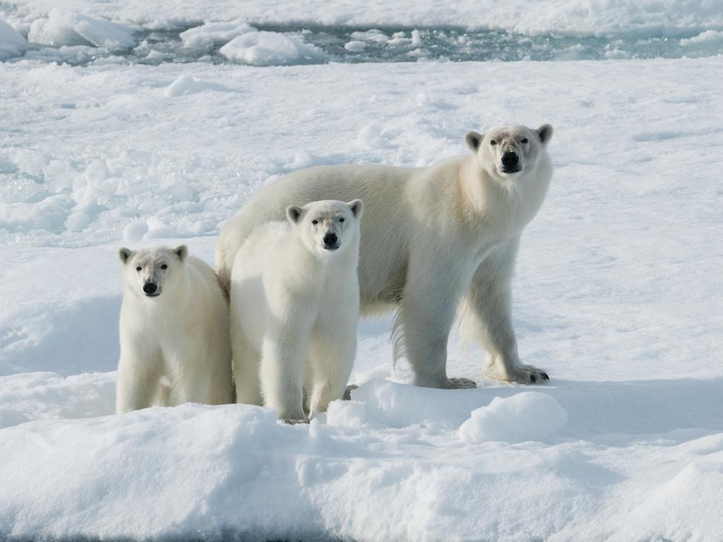 39 waarom ijsberen geen pingu ns eten 39 door jan vermeer mondiavisueel - Foto van de show ...