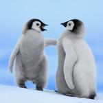 Ijsberen en Pinguins show foto 04