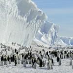 IJsberen en Pinguins show foto 05