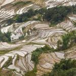 Rijstvelden Yunnan