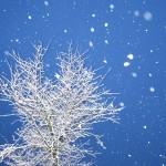 Sneeuwstorm