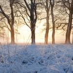 Sneeuw en de zon