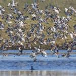 Holland – Natuur in de Delta – Het boek op het doek