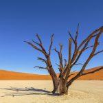 Woestijn; Desert