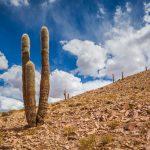 Landschap met cactus